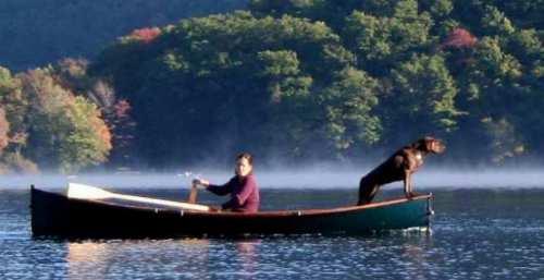 dog boat1