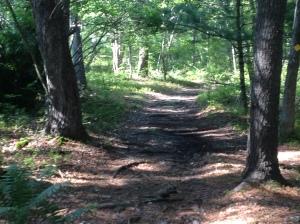 Grills trail