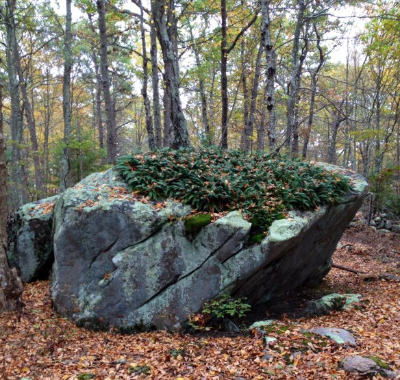 carter erratic with plants