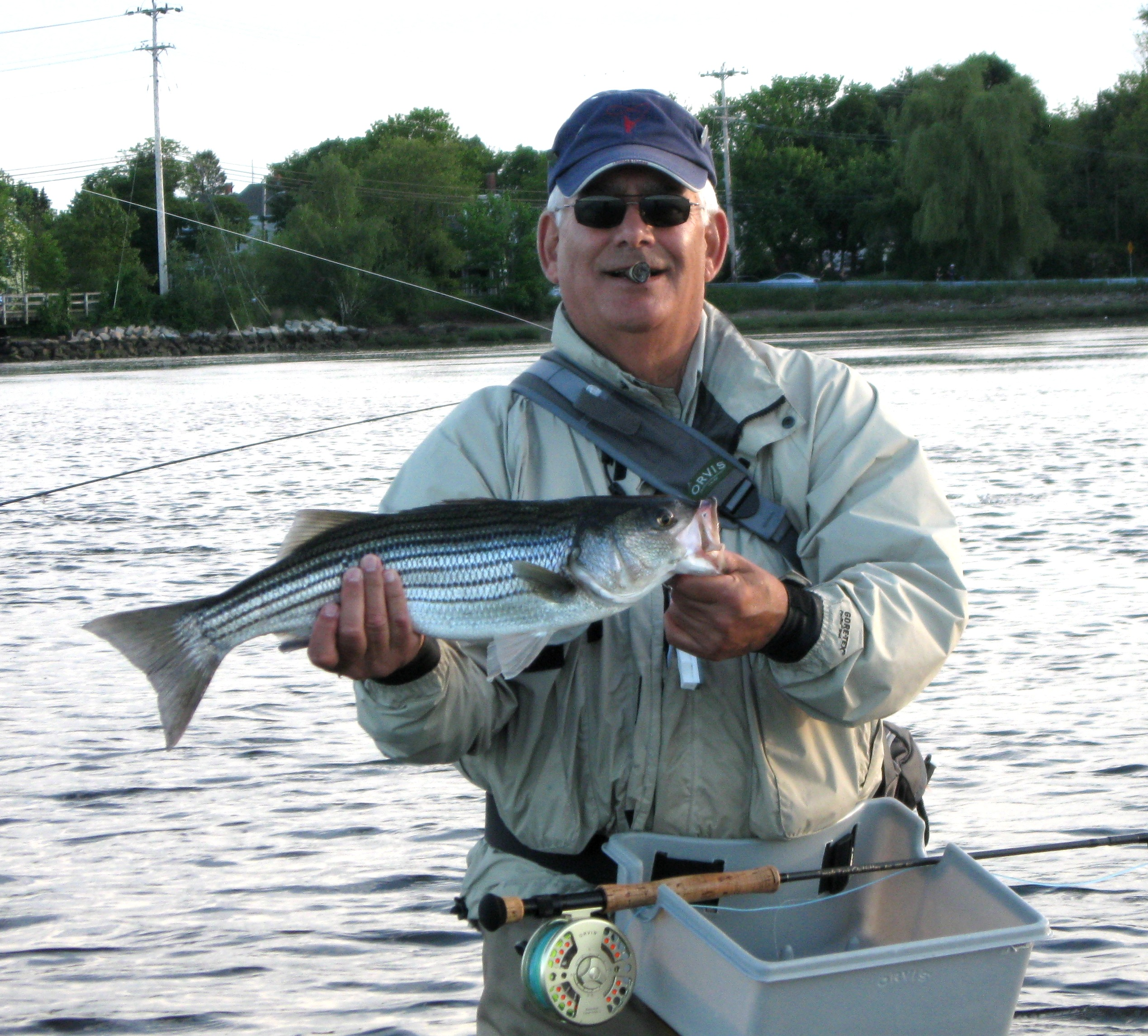 Striped bass hickory shad are taking flies in ri for Striper fishing ri