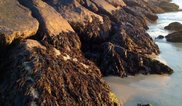 Seaweed cropped